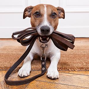 Bliv hundepasser - Dogley er Danmarks største portal for privat hundepasning